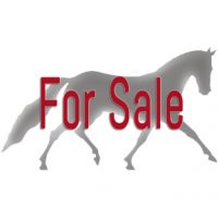 Horse Sales Agents