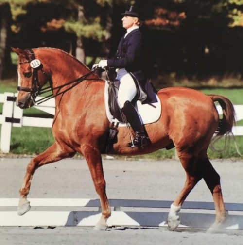 Lisa trained Ihorn and showed him successfully at Grand Prix from 2004 until his retirement in 2012. With Ihorn, Lisa accumulated over 25 scores above 60% at the FEI levels with several Regional Championship and Reserve Championship placings.