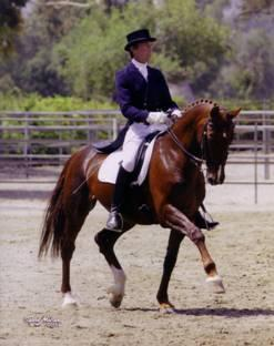 Ulf Riding Doonsbury. A Dutch Warmblood Mare