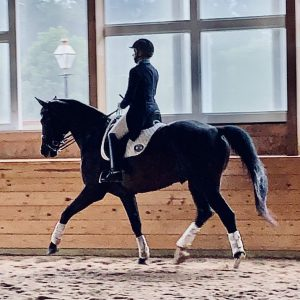 PREPARE FOR 2021 SHOW SEASON WITH LISA SCHMIDT